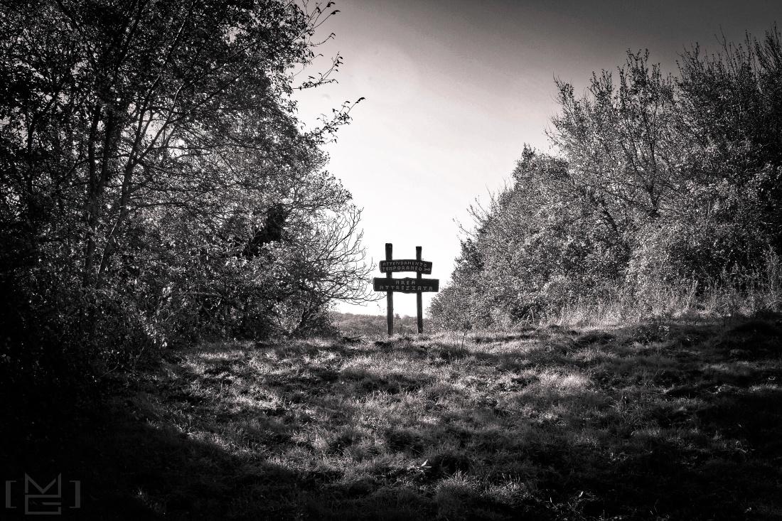 Woods, #nature
