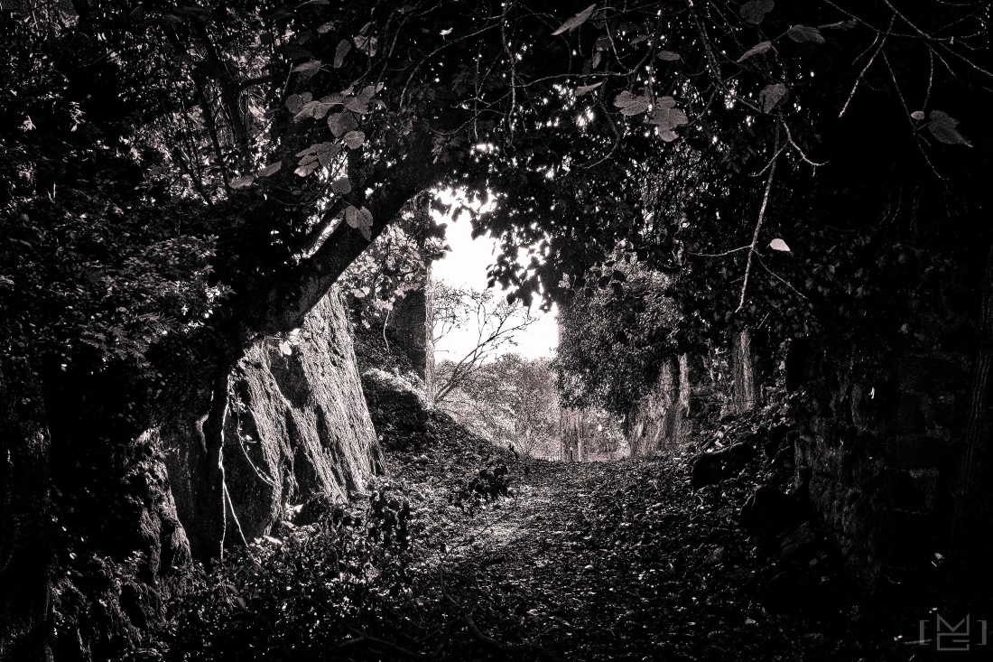 Woods, #nature /2